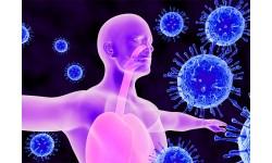 Подсилване на имунната система - всичко което е важно да знаем